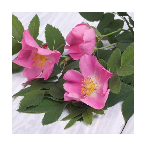 Olej z dzikiej róży nierafinowany