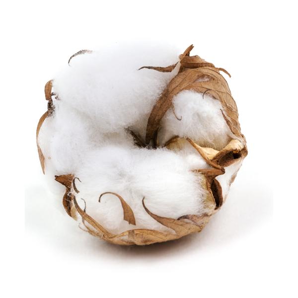 Czysta bawełna - esencja zapachowa