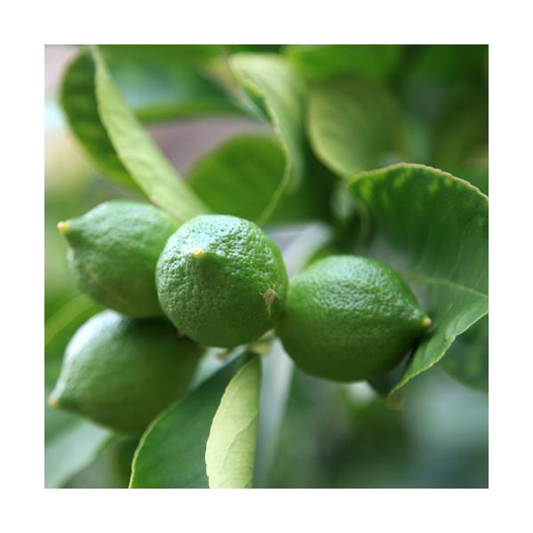 Olejek petitgrain (Citrus Aurantium)