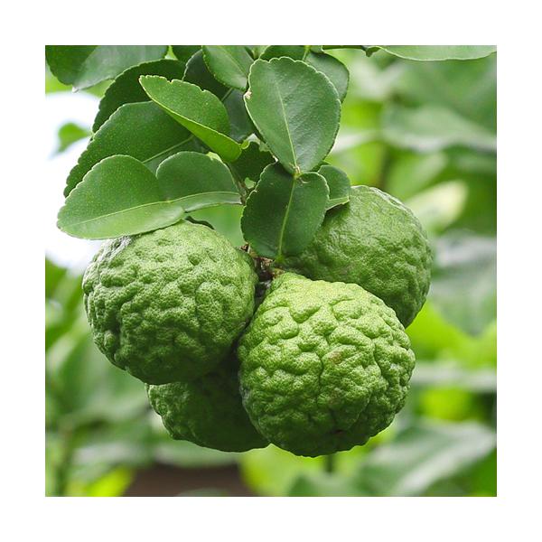 Olejek bergamotowy (Citrus Bergamia)