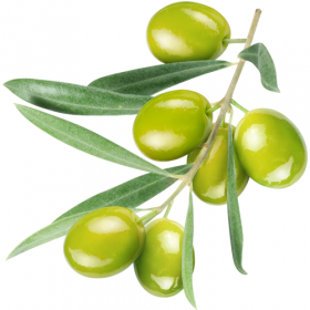 skwalan z oliwek