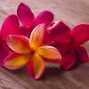 frangipani olejek zapachowy do mydła, świeć, kosmetyków