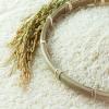 Ryż, shea i bambus olejek zapachowy do mydła, świec, wosku