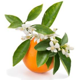 Kwiaty pomarańczy - esencja zapachowa