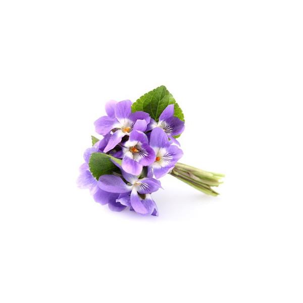 fiołek esencja (olejek) zapachowa