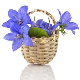 Niebieskie Dzwonki - esencja zapachowa