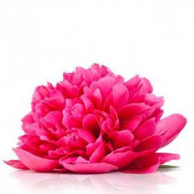 Piwonie z kwiatami pomarańczy - esencja zapachowa