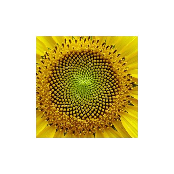 Olej słonecznikowy nierafinowany eko