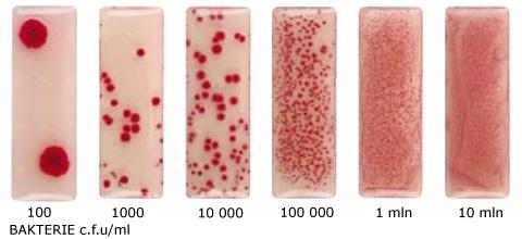 Bakterie test mikrobiologiczny
