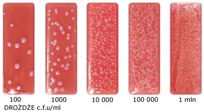 Drożdże test mikrobiologiczny
